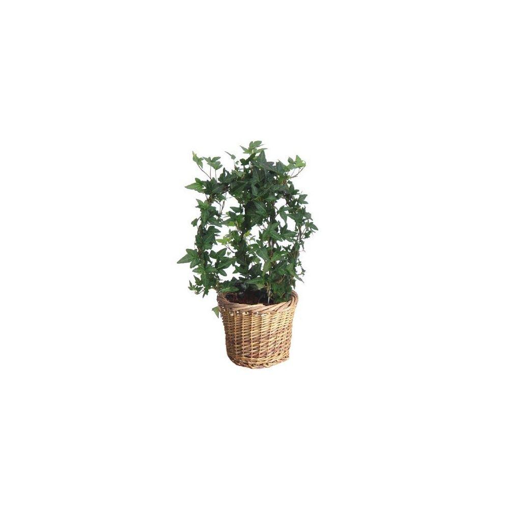 lierre boule cache pot plantes et jardins. Black Bedroom Furniture Sets. Home Design Ideas