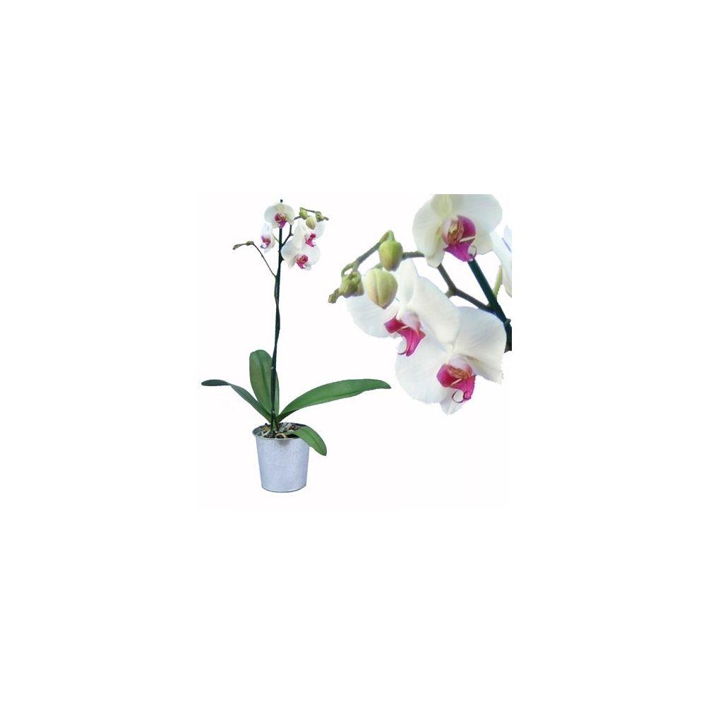 Pot de fleur les aligner bing images - Pot de fleur en zinc ...