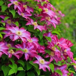 Image gallery plantes for Plante et jardins