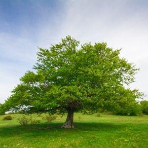 Arbre prix for Prix de l elagage d un arbre