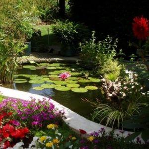 Jardin bassin 100 images bassin de jardin quand for Bassin de jardin com