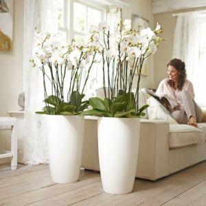 plante pour salon