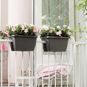 Quelles plantes grimpantes pour un balcon marie claire plante pour balcon for Quelles plantes pour balcon