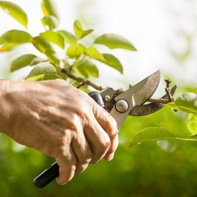 Outils de jardin à main
