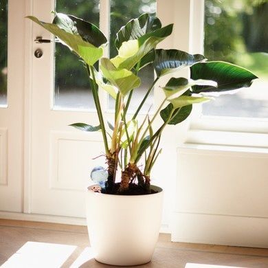 Toutes nos plantes vertes