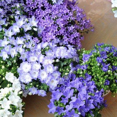 Toutes nos plantes vivaces