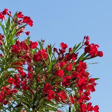 Toutes nos plantes méditerranéennes
